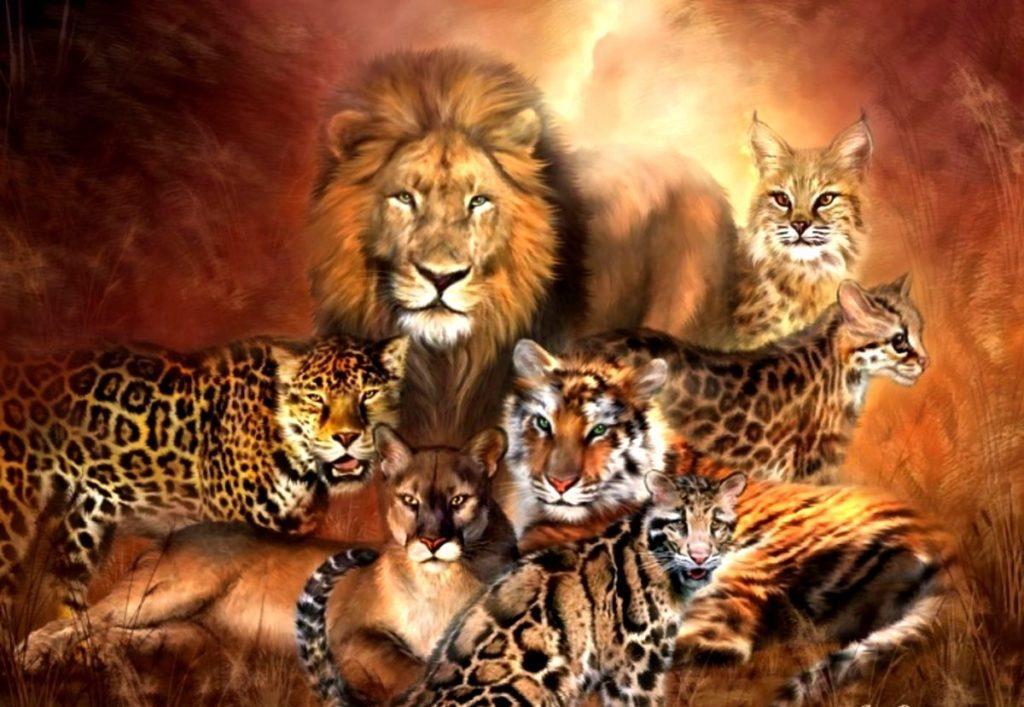 дикие кошки в природе