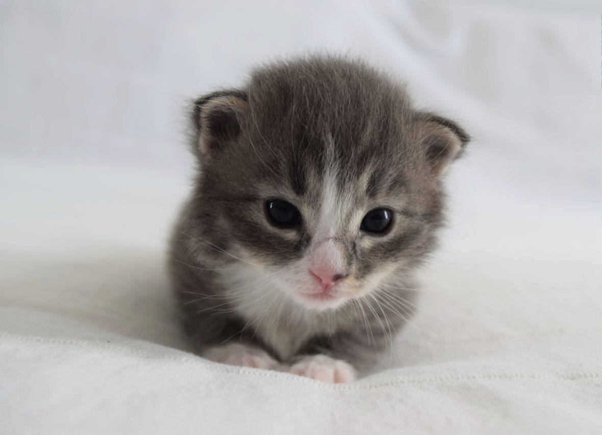 маленький котенок на бархатном кресле