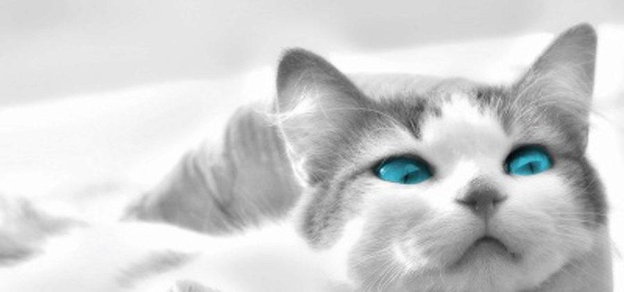 О породе кошек охос азулес