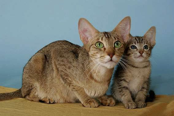 кошка и котёнок на покрывале