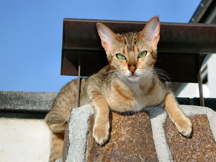 кошка забралась высоко на дымоход