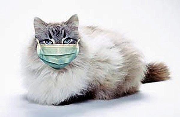 О кошках, которые лечат людей