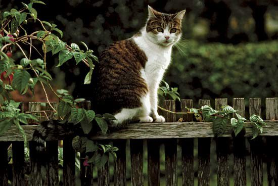 Если ваша кошка ушла из дома