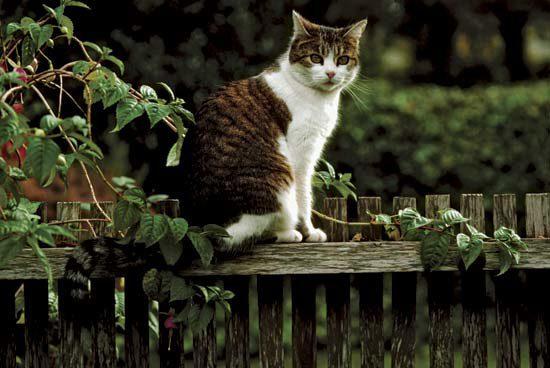 кот ушёл из дома