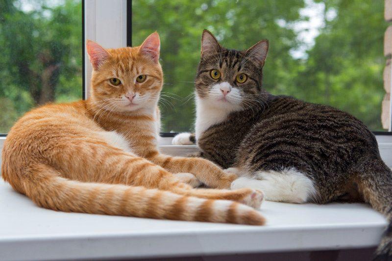 два кота сидят