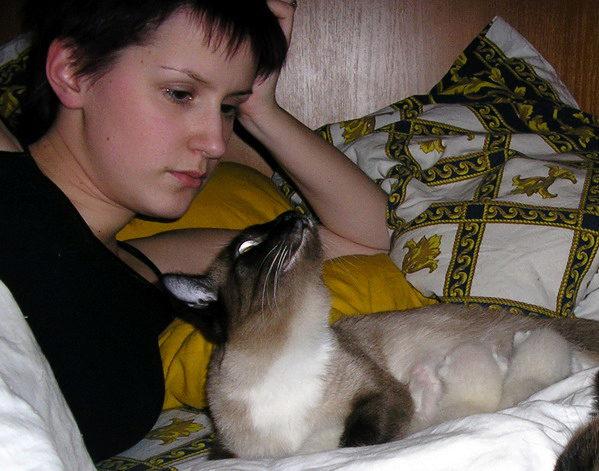 кошки в постеле