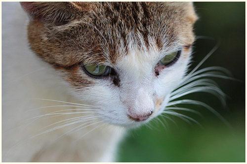 больная кошка глисты