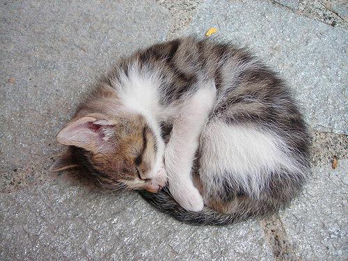 больной котенок глисты