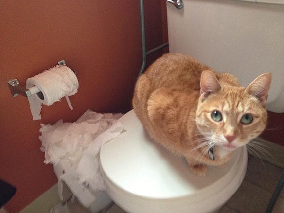 Что делать при глистах у кошки