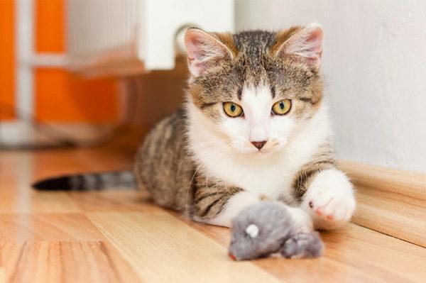 кошка играет на полу