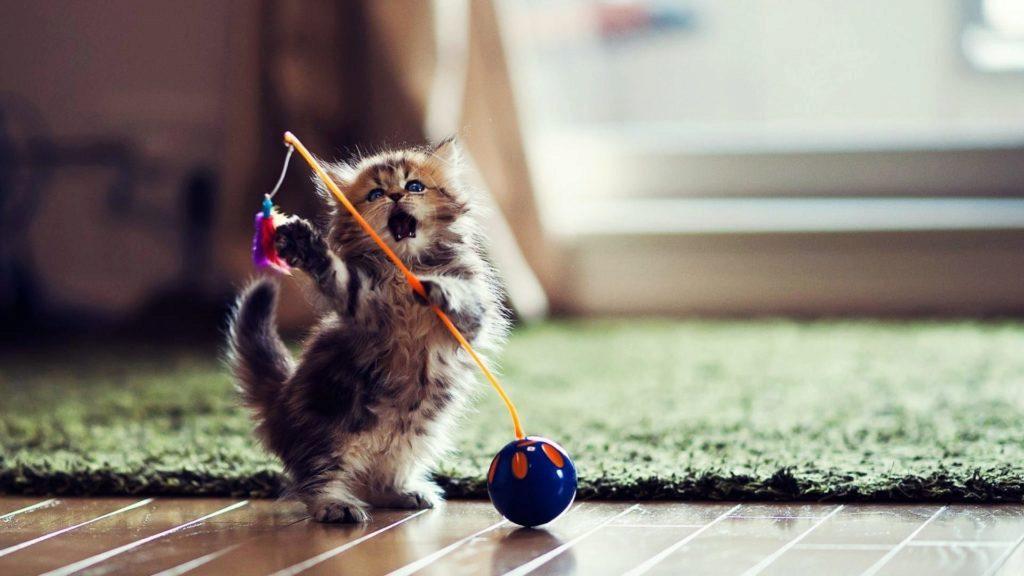котенок и его игрушки