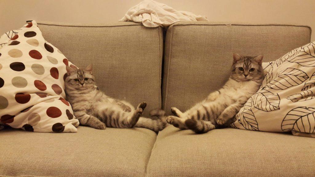 коты подружились