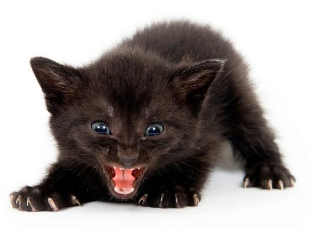 котенок кусается