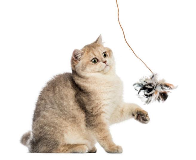 кот играет с удочкой