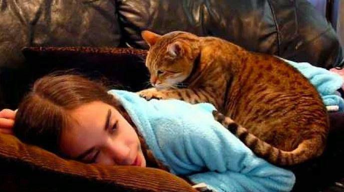 кошка лечит девушку