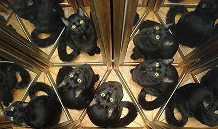много черных кошек