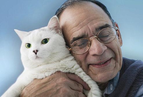 лечебное поглаживание кота