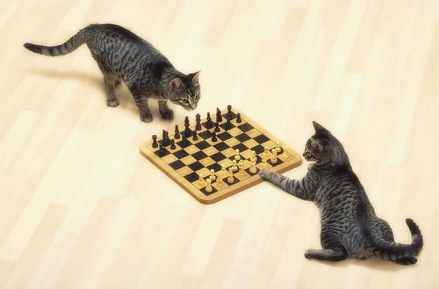 две кошки играют
