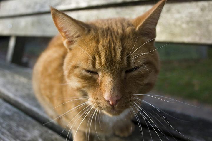 Причины по которым коты уходят из дома