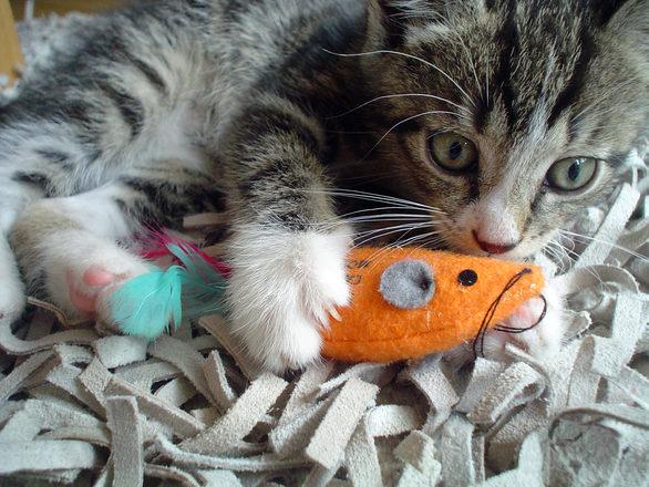 у котенка режутся зубы
