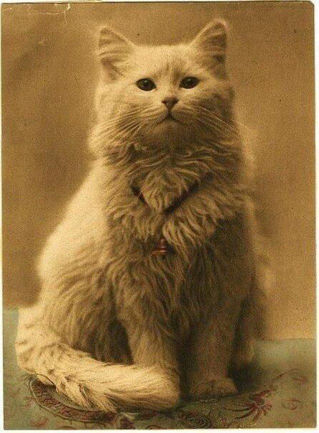 первое фото кота