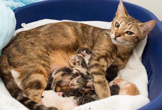 кошка родила котят