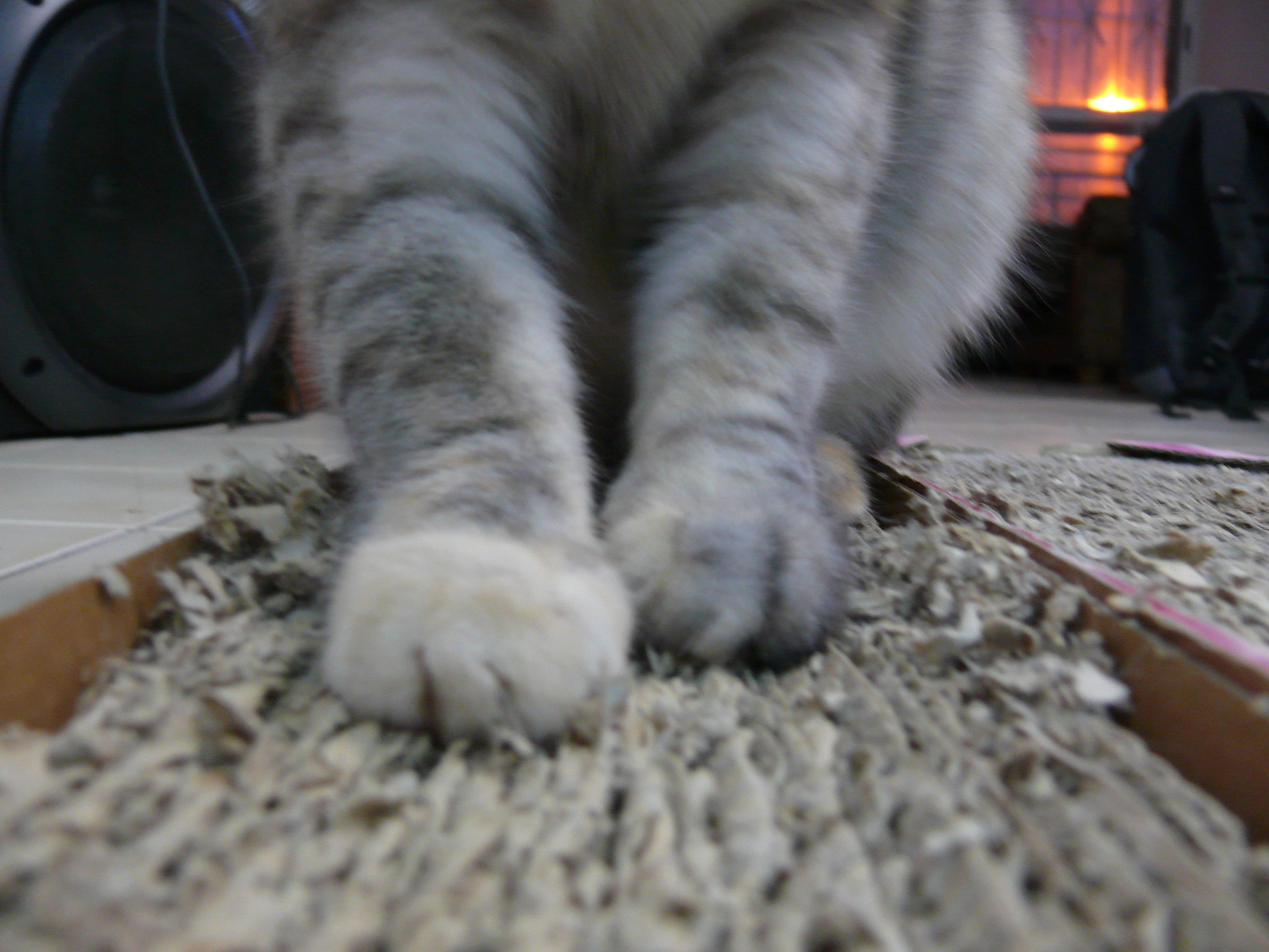 how to train a cat not to scratch carpet stores