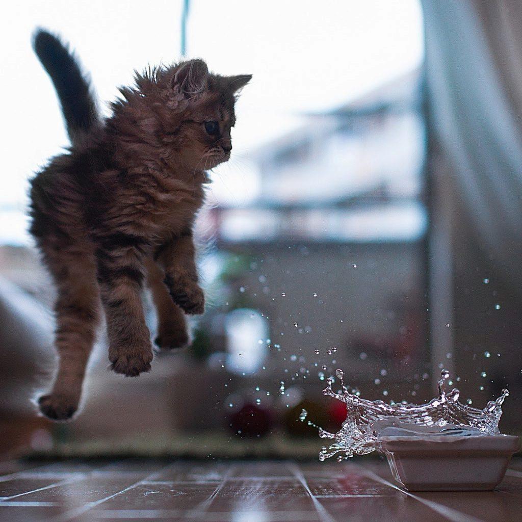 котенок испугался