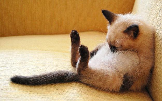 котенок спит и храпит во сне