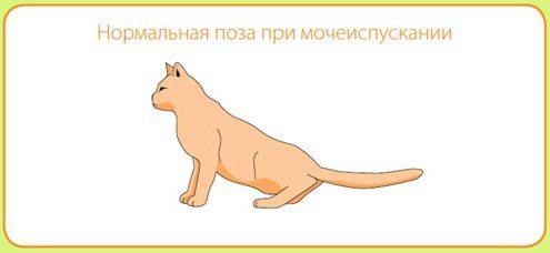 поза кота на лотке