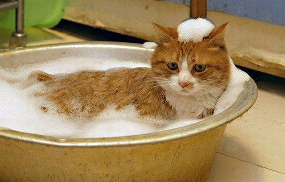 намыленный кот в тазу с водой