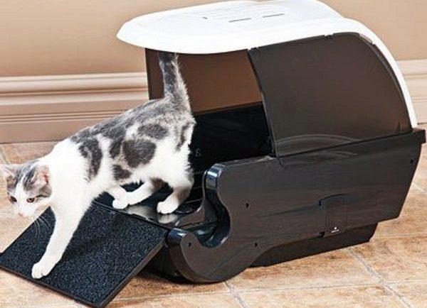 лото-домик для кошки