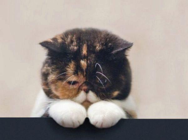 кот загрустил