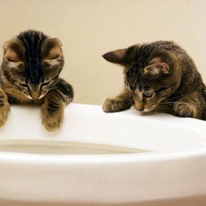 котята и унитаз