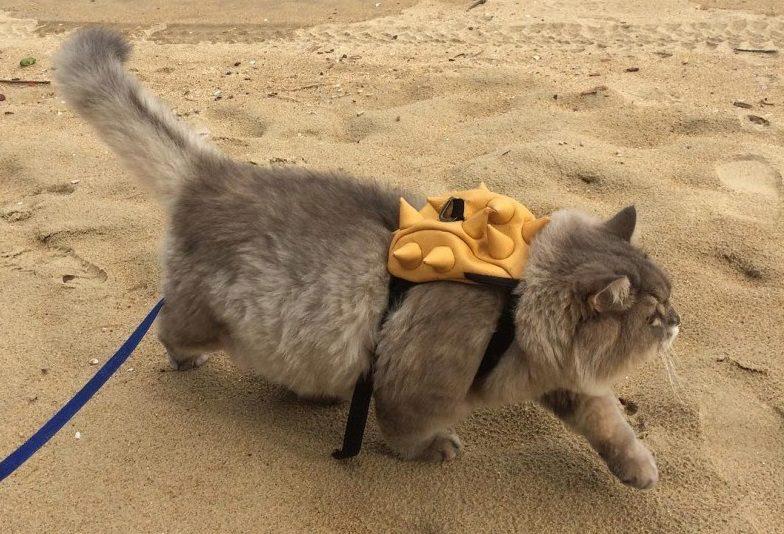 Известные коты: Бон-Бон