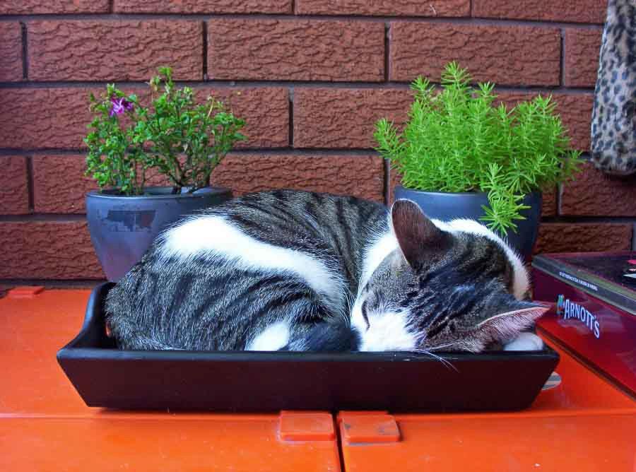 котенок спит в лотке