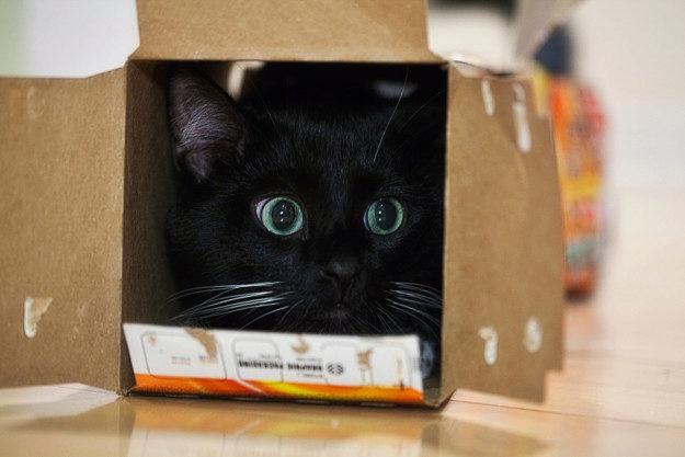 кошка нападает из засады