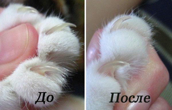 Как правильно подстричь когти кошке