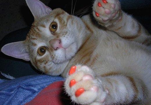 антицирапки для кошек