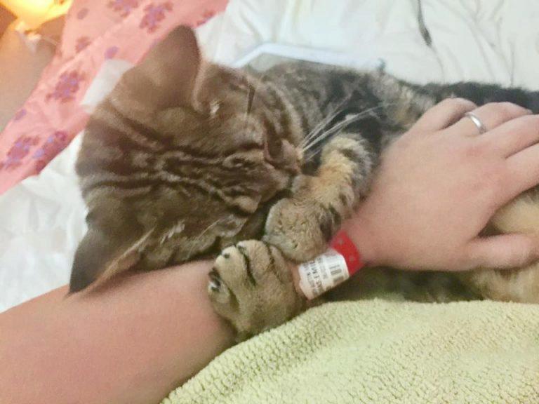 кошка обнимает человека