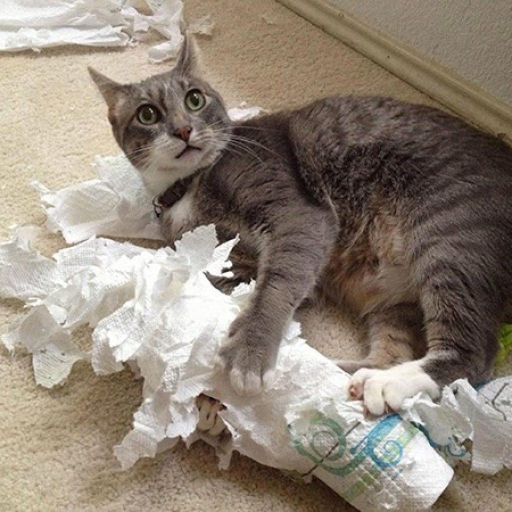 кот дерет туалетную бумагу