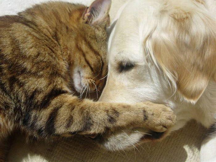 кошка обнимает собаку