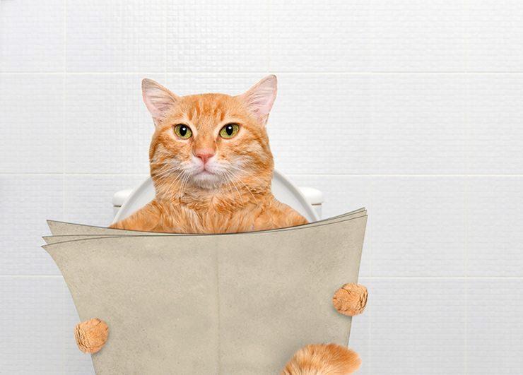 кот на туалете