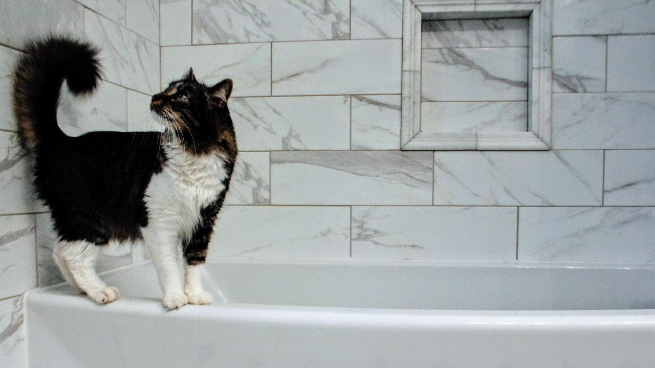 Туалет для кошки от А до Я. Советы ветеринара.