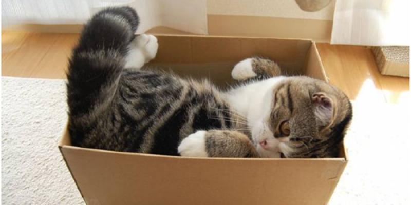 О любви кошек к коробкам и другим укрытиям