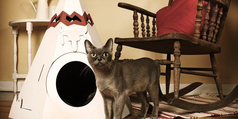Как выбрать или сделать домик для кошки