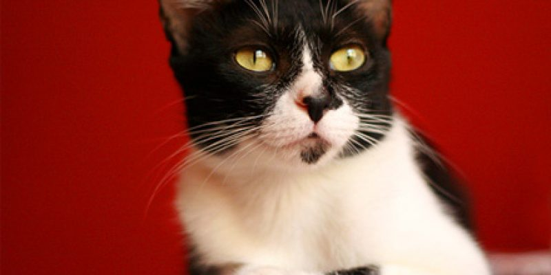 О Черно-белых котах и кошках